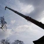 伐採・吊るし切り